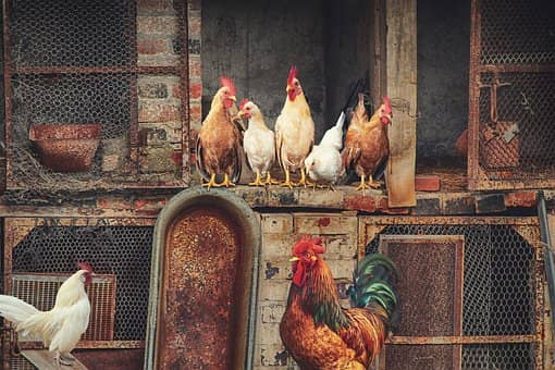 poultry farm subsidy in India